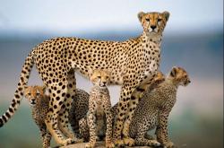 دانلود تحقیق انقراض گونه ها